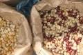 Les variétés anciennes de semences sèment la discorde