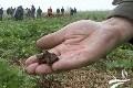 Jacky Berland, agriculteur : «Le ver de terre est notre charrue!»